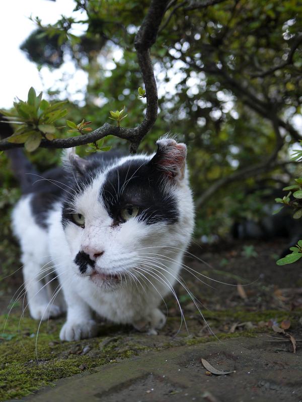 やっと友だちになれそうな猫