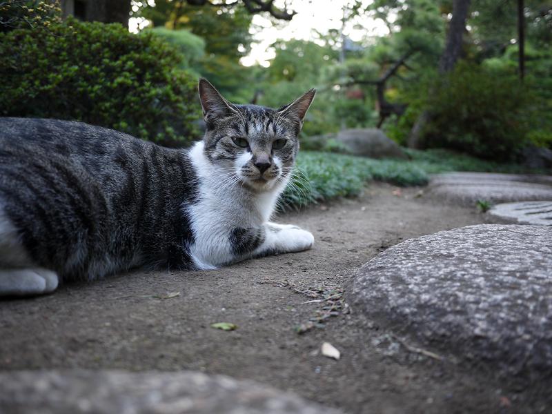 礎石の上の若猫