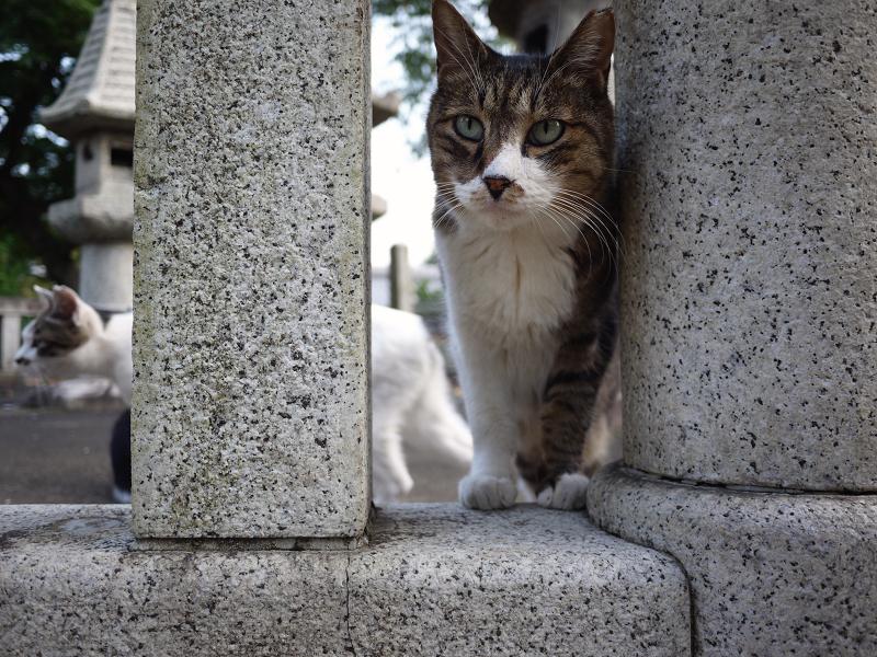 玉垣から顔を出すネコ