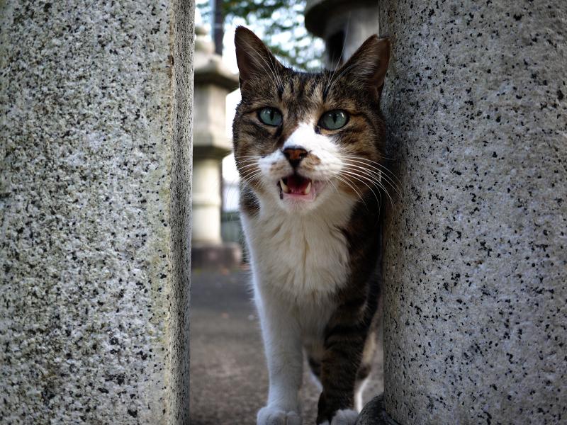 玉垣でベロを出してるネコ