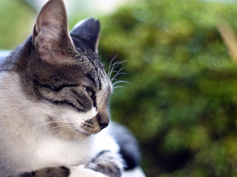 眠たそうなネコの横顔