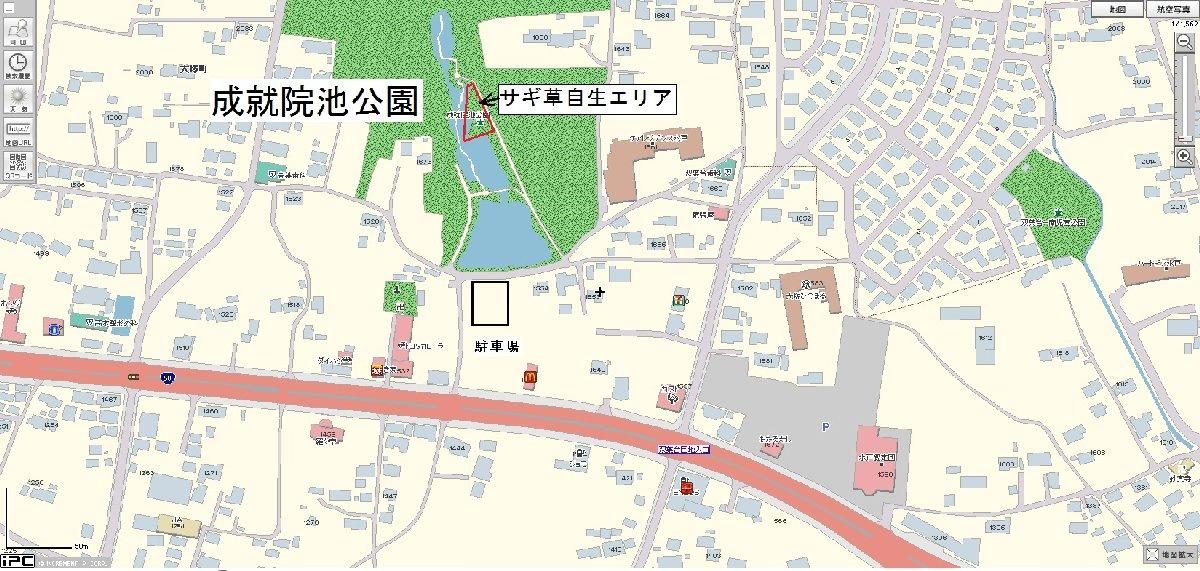 成就院池サギ草2010.7.17-1