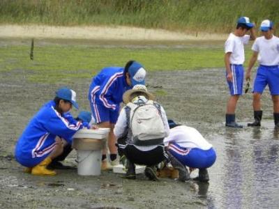 砂泥地の動物調査