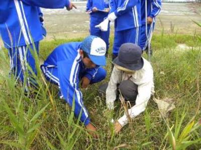 沿岸の植物調査
