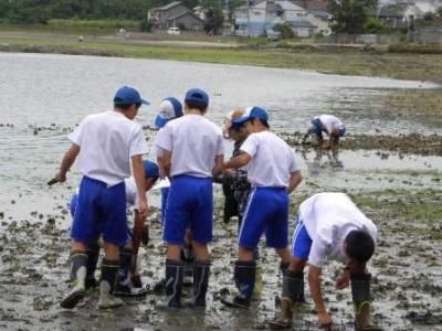 泥地・岩場の動物調査