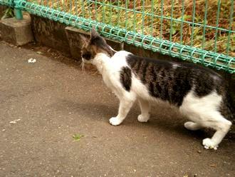 猫散歩002