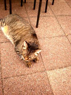 猫散歩004-up