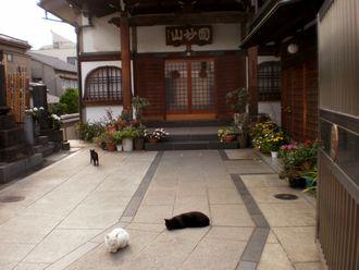 猫散歩010-up
