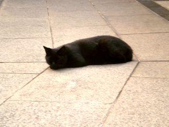 猫散歩009-up