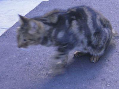 猫散歩012-up