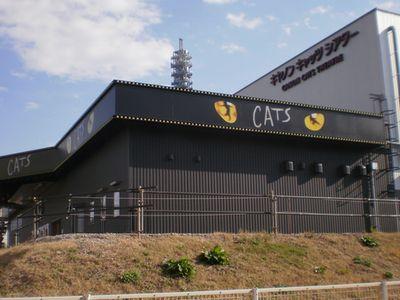 cats-01-up.jpg