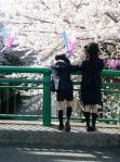 目黒川の花見風景-06D 05qc