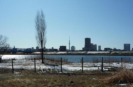 千住新橋緑地2対岸スカイツリーを望む。気持ちいい