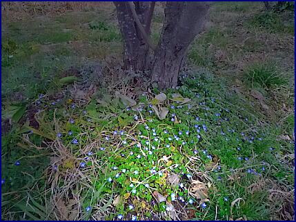 春の花(1)春の先駆け1