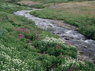 Creek_convert_20100401174040[1]