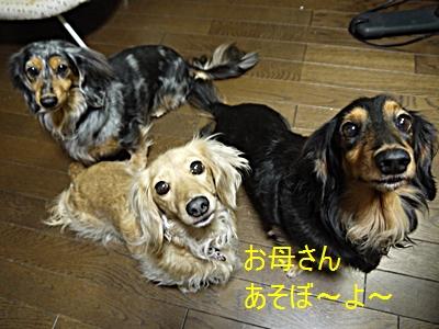 011_20130129201154.jpg