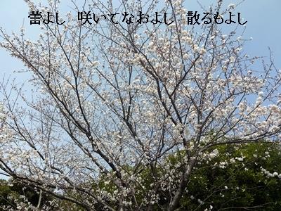 018_20130331185021.jpg