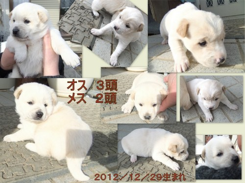 2013_0123子イヌ 里親1