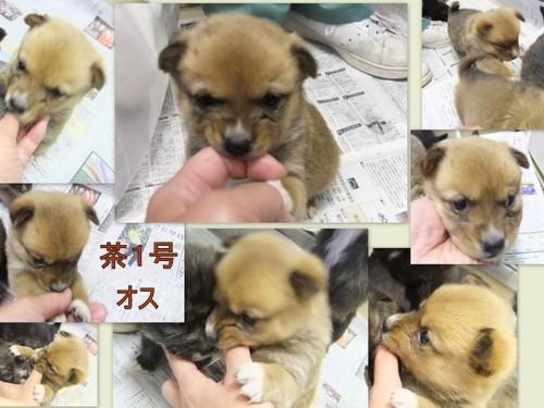 2013_0212笠間わんこ