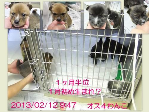 2013_0212笠間わんこ4