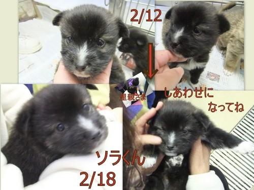 2013_0218笠間わんこ22
