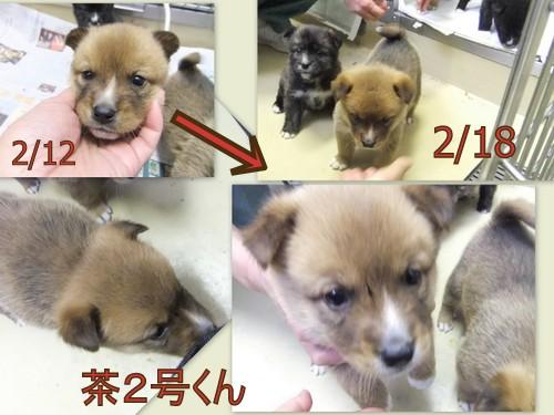 2013_0218笠間わんこ24