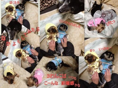 2013_0221newウェア3