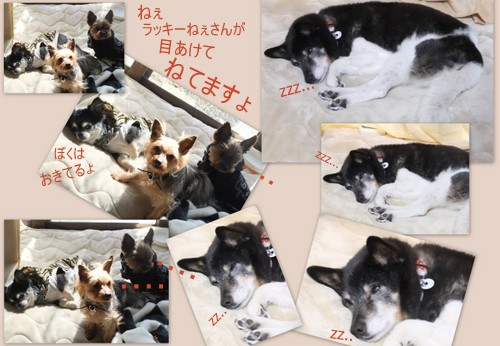 2013_0405桜公園