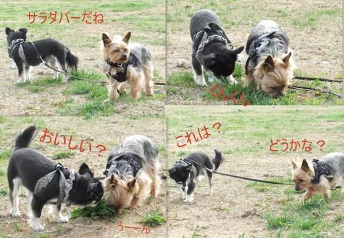 2013_0405桜公園4