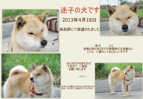 2013_0418柴ちゃん