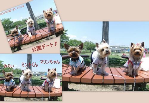2013_0531maigo札と公園1