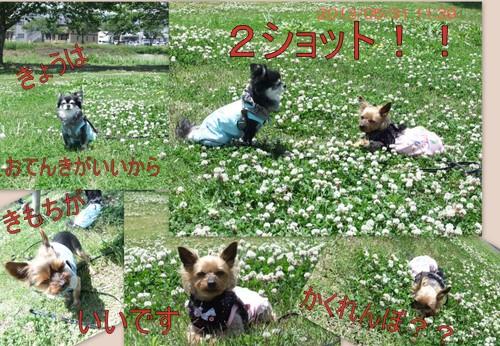 2013_0531maigo札と公園2