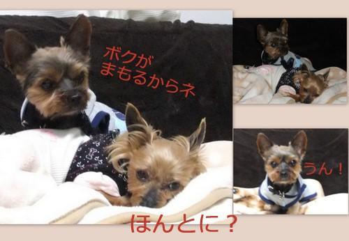 2013_06083Dcutスタイル