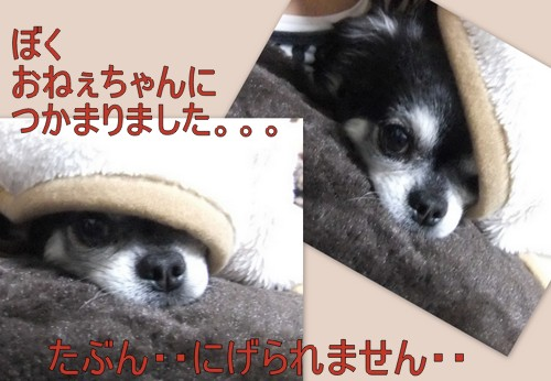 2013_06083Dcutスタイル2