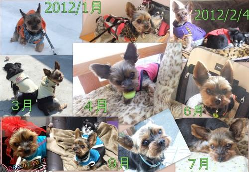 2012_1201愛ちゃん里親募集