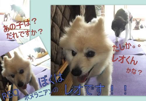 2013_0727菊地ファミリー1