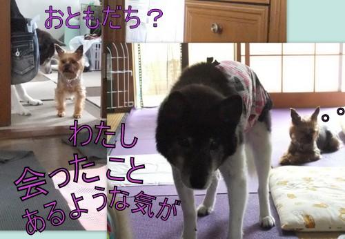 2013_0727菊地ファミリー2