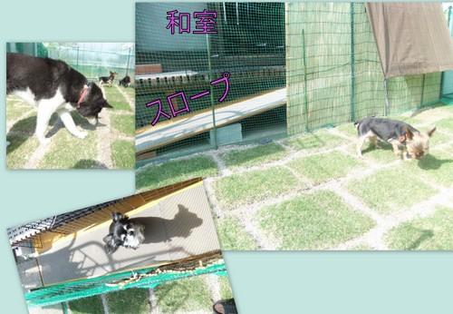 2012_0531芝生とバディ