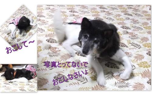 2013_0822亮&わん&ムック1
