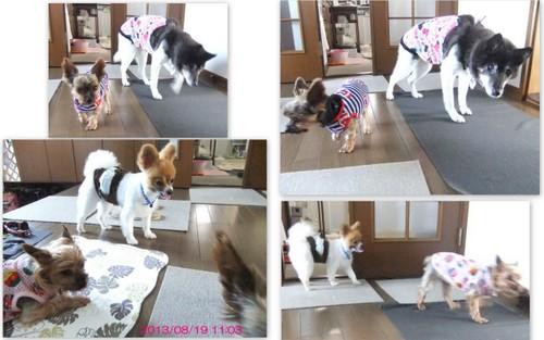 2013_0822亮&わん&ムック6