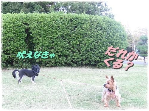 2013_0929公園0003