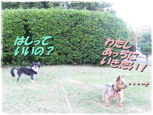 2013_0929公園0004