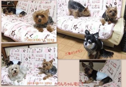 2013_0511yamagata13.jpg