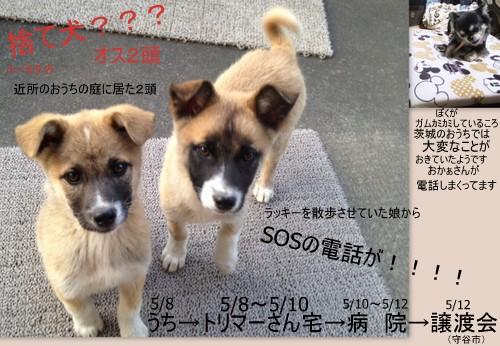 2013_0511yamagata14.jpg