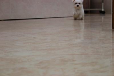 クッキー子犬 025