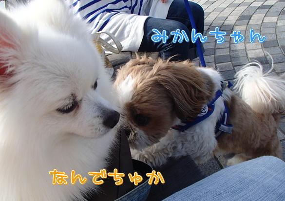 2_2014093019123812d.jpg