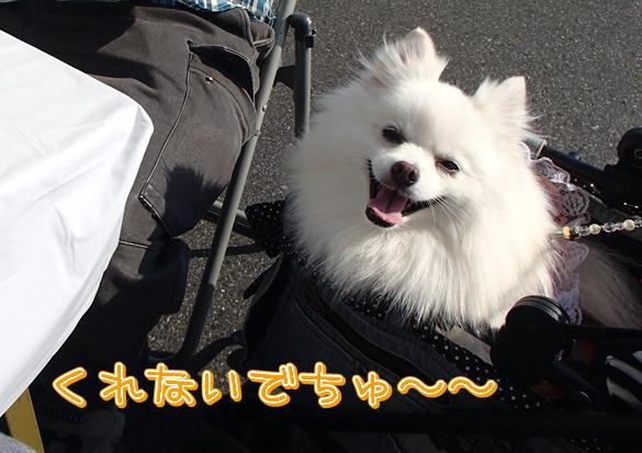 4_20141021221734a38.jpg