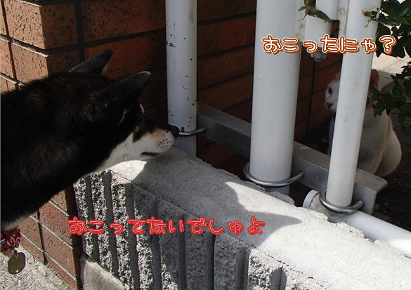 4_201411011836549ed.jpg