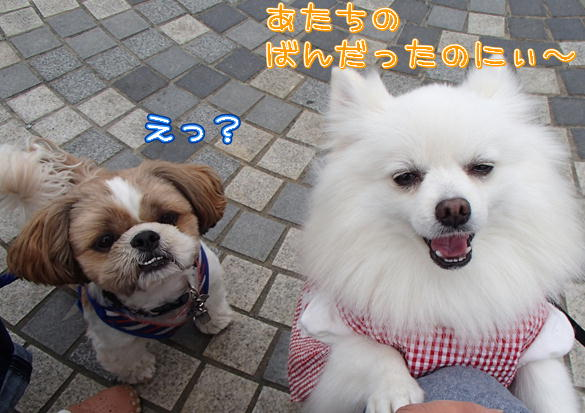7_20141111212748ad5.jpg