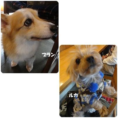 12-23-6b.jpg